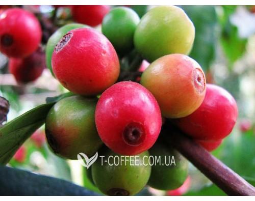 Йеменский хаск - чай из кофе