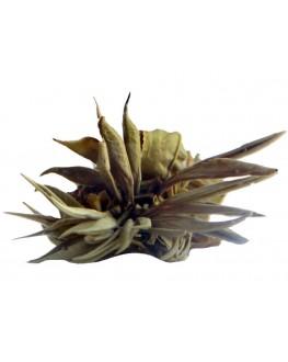 Жасминовая Клубника зеленый вязаный чай Світ чаю